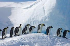 volontaire antarctique