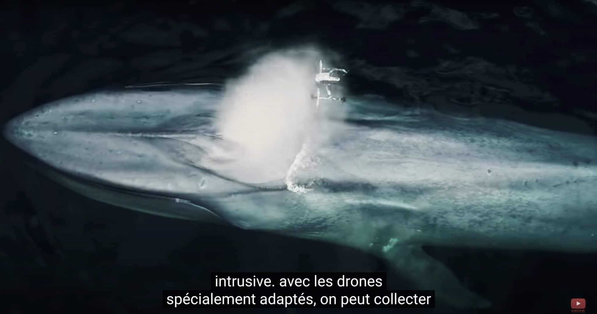 baleine drone