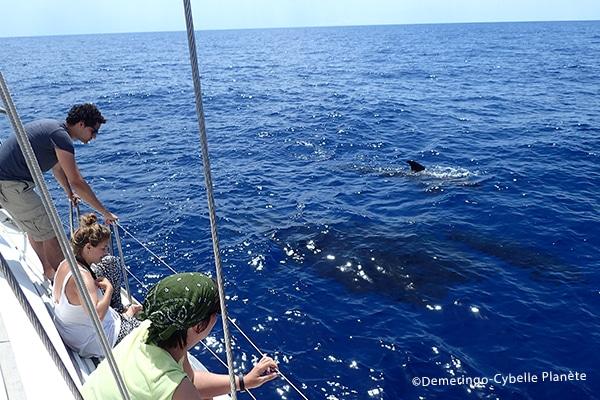 dauphins méditerranée
