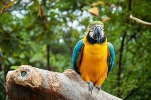 Protection des animaux sauvages en Équateur
