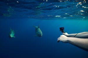 Mission snorkeling